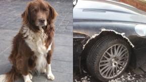 Isso é o que acontece quando você deixa seu cachorro sozinho com um Aston Martin