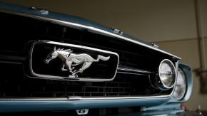 Garagem animal: os carros que têm nomes inspirados no mundo dos bichos