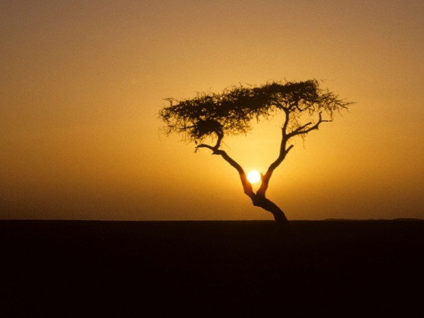 arbre-tenere-niger-africa