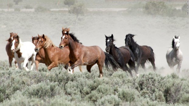 140716163603-mustang-monument-wild-horses-running-horizontal-large-gallery